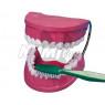 [Jak se správně čistí zuby ?]
