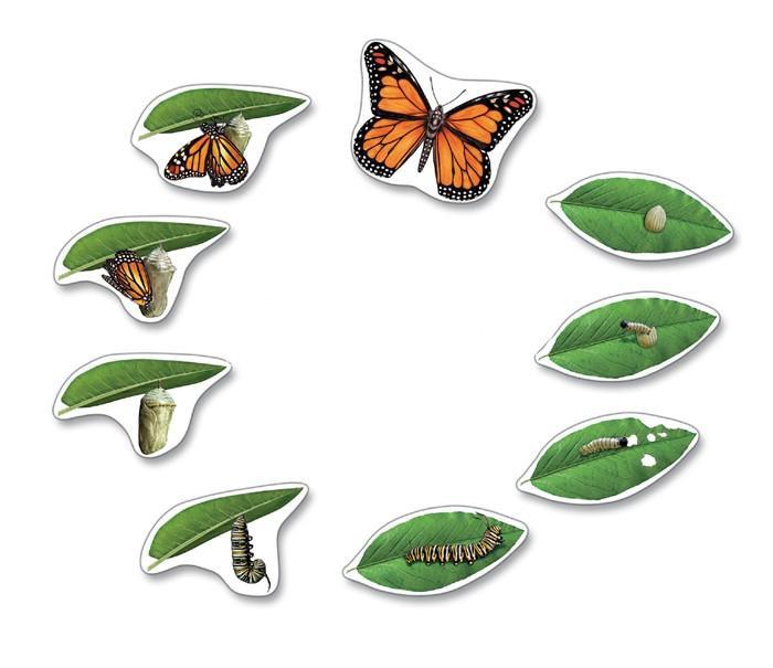 Životný cyklus - magnetky motýľ  b82593f2aef