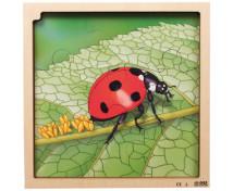 [Vrstvové puzzle - Životní cyklus berušky]