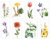 [Naše kvety]