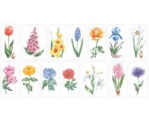 [Záhradné rastliny]
