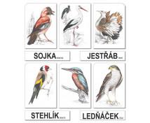 [Vtáky - CZ]