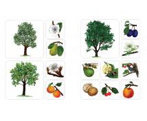 [Ovocné stromy]
