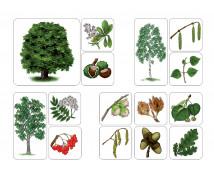 [Listnaté stromy]