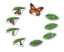 [Životní cyklus - magnety - Životní cyklus motýle (9 ks)]