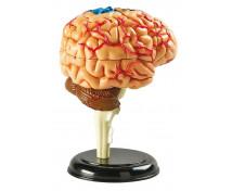 [Minimodel - mozek]