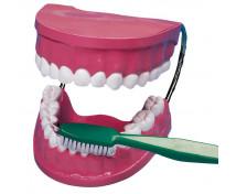 [Jak się powinno myć zęby?]