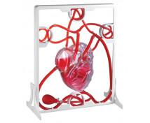 [Obehový systém srdca]