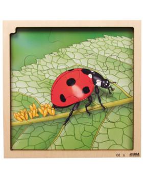 Vrstvové puzzle - Životný cyklus lienky