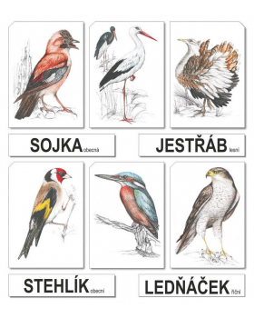 Vtáky - CZ