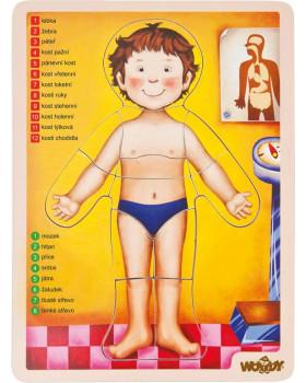 Puzzle - Ľudské telo