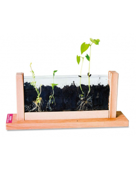 Pozorování růstu rostlin