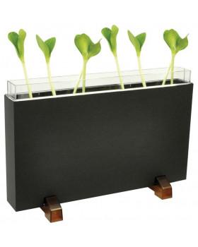 Pozorovanie rastu rastlín