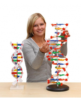 DNA - model