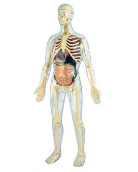 Ľudská anatomická sada