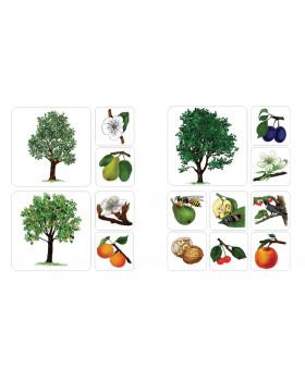 Balkonové ovocné stromy
