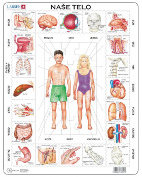 Puzzle - Lidské tělo - slovenská verze