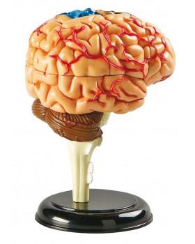 Minimodel - mozek