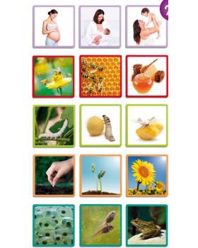 Trénovanie postupnosti v Maxi obrázkoch - V prírode