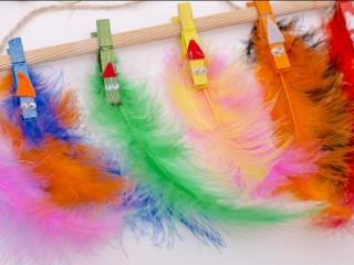 Karnevalové ptáci